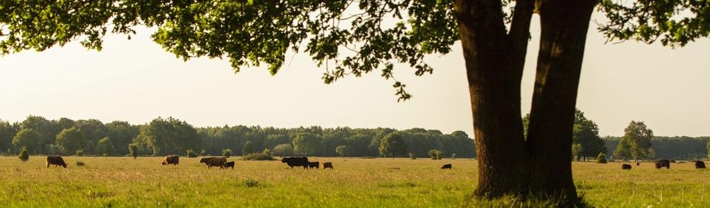 De Maashorst land