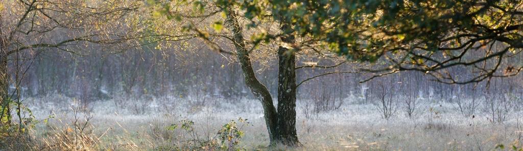 De Maashorst bos